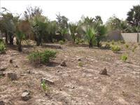 Land For Sale - Bijilo - close...